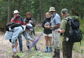 Botanikkurs på Gotska Sandön, 27 juni – 2 juli 2021